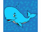 Balena timida