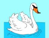 Cigno nell'acqua