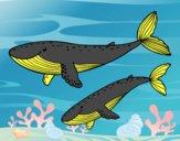 Disegno Balene pitturato su amirotto