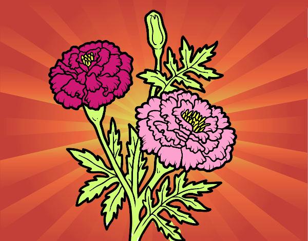 Fiore meravigliarsi