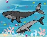 Disegno Balene pitturato su fabio1970