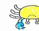Un granchio di mare