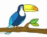 Disegno Un tucano pitturato su mcristina
