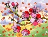 Ramo di ciliegio