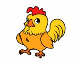 Giovane gallo