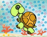 Tartaruga terrestri