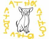 Un cane chihuahua