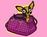 Chihuahua viaggio