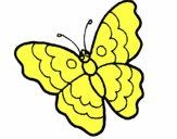 Farfalla 13