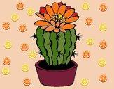 Cactus fiorito