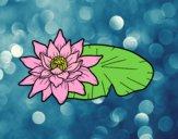 Una fiore di loto