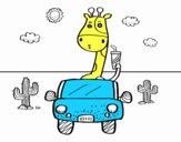 Giraffa guida