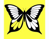 Farfalla 19
