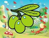 Olive filiali