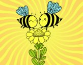 Coppia di api