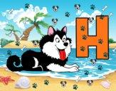 H di Husky