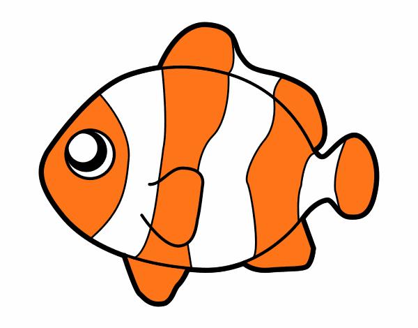 Disegno Pesci Pagliaccio Colorato Da Utente Non Registrato Il 24 Di