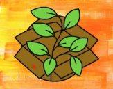 Pianta ecologica