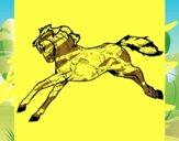Cavallo in corsa