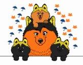 Famiglia Husky