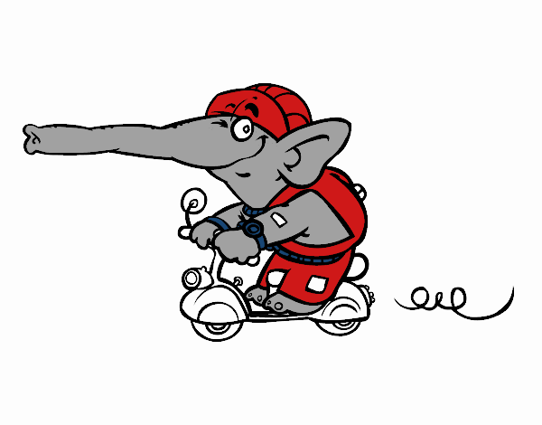Elefante in motocicletta