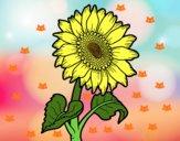 Fiore di girasole