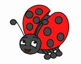 Ladybug Carino