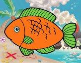 Pesce da mangiare