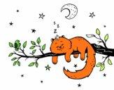 Il gato e la luna