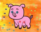 Un porcellino