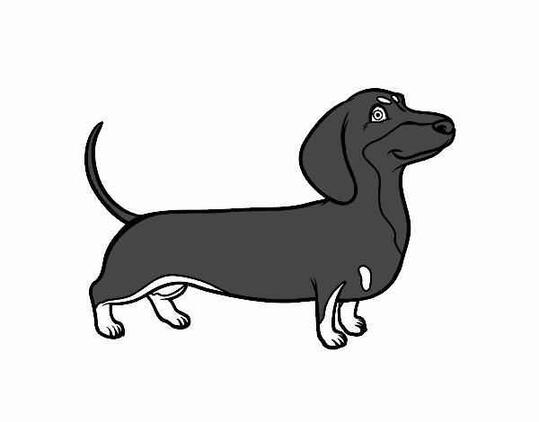 Disegno Cane Bassotto Colorato Da Utente Non Registrato Il 22 Di