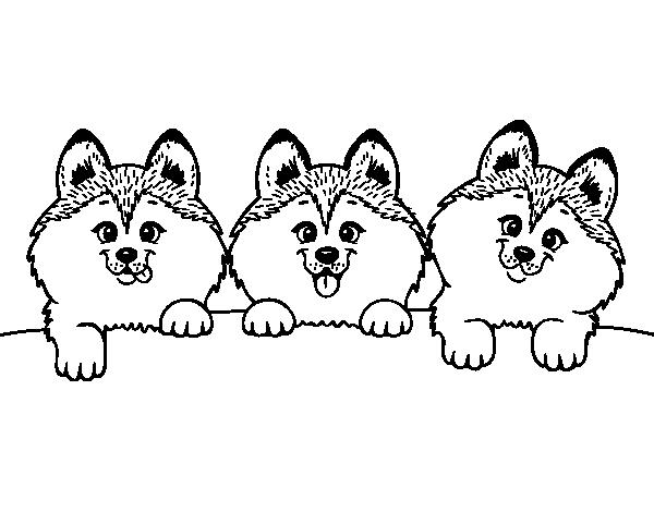 Disegno Di 3 Cuccioli Da Colorare Acolorecom