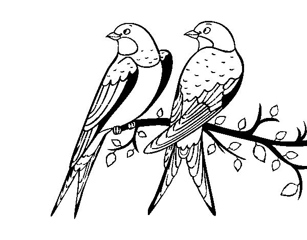 Disegno Di Coppia Di Uccelli Da Colorare Acolorecom