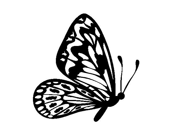 Disegno Di Farfalla Ali Normale Da Colorare Acolore Com