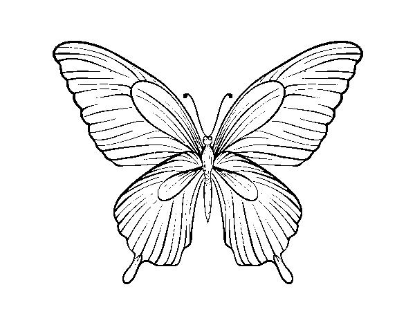 Disegno Di Farfalla Tropicale Da Colorare Acolore Com
