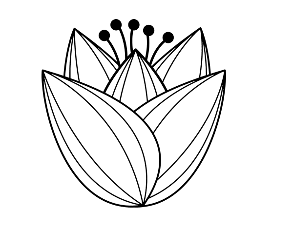 Disegno Di Fiore Di Tulipano Da Colorare Acolore Com
