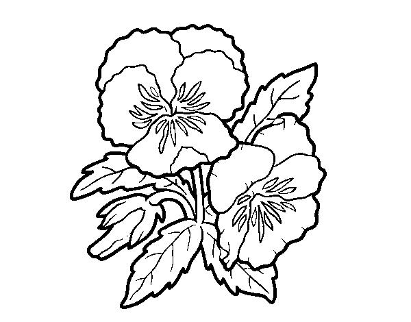 Disegno Di Rosa Con Foglie Da Colorare Acolore Com: Disegno Di Fiori Di Viola Del Pensiero Da Colorare
