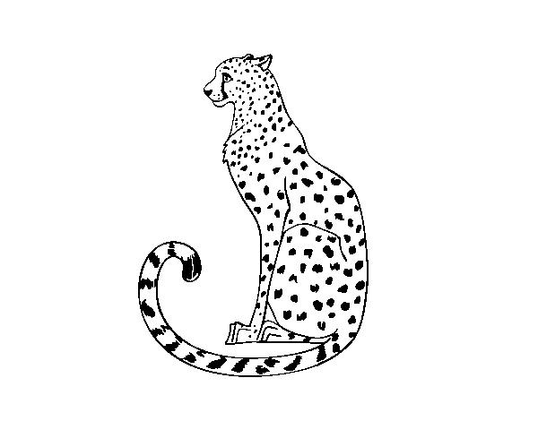 Disegno Di Ghepardo Seduto Da Colorare Acolore Com