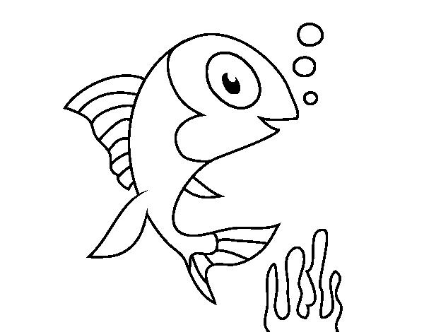 Disegno Di Pesce Di Mare Da Colorare Acolore Com
