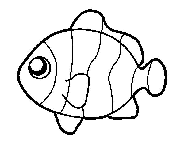 Disegno Di Pesci Pagliaccio Da Colorare Acolore Com