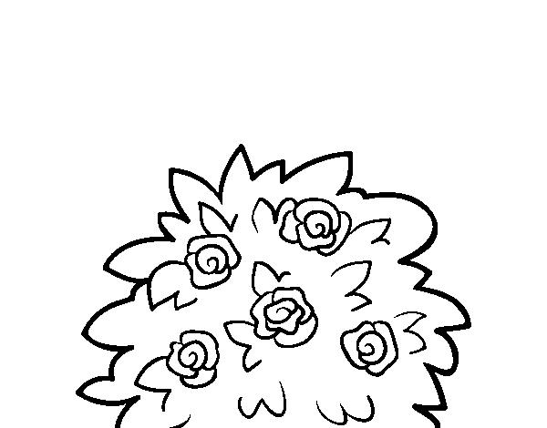 Disegno Di Rosa Canina Da Colorare Acolorecom
