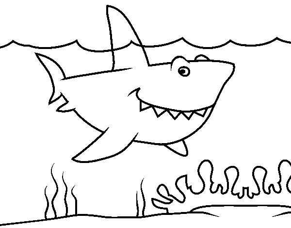 Disegno di squalo marino da colorare for Disegno squalo