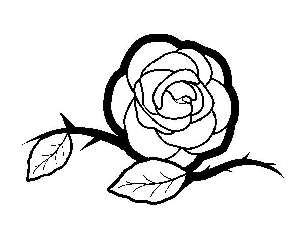 Disegno Di Rosa Con Foglie Da Colorare Acolore Com: Disegno Di Una Bella Rosa Da Colorare