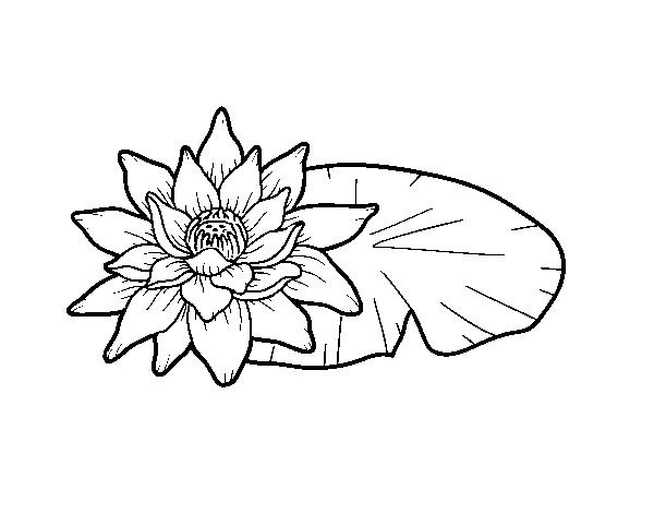 Disegno Di Rosa Con Foglie Da Colorare Acolore Com: Disegno Di Una Fiore Di Loto Da Colorare