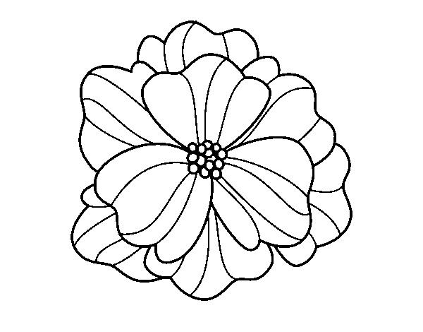 Disegno Di Viola Del Pensiero Da Colorare Acolorecom