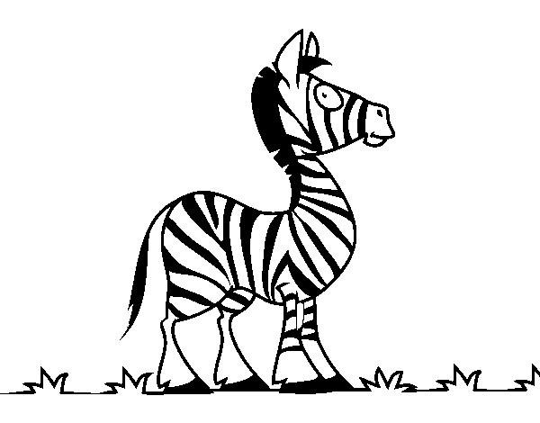 Disegno Di Zebra Africana Da Colorare Acolore Com