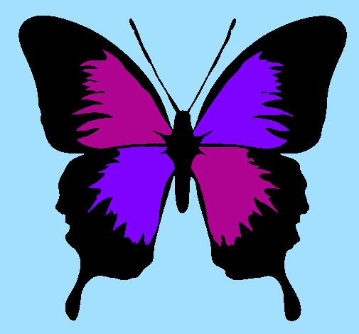 Disegno Farfalla Con Le Ali Nere Colorato Da Utente Non Registrato