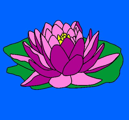 Disegno Nymphaea Colorato Da Utente Non Registrato Il 21 Di