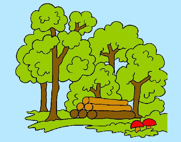Disegno Bosco Colorato Da Nick Il 06 Di Settembre Del 2012