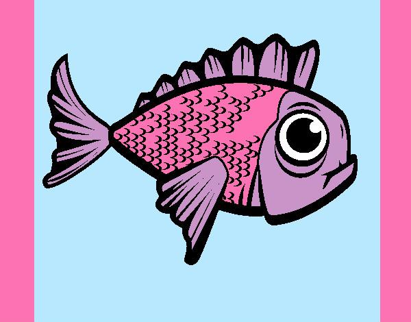 Disegni Di Animali Marini Da Colorare Acolorecom